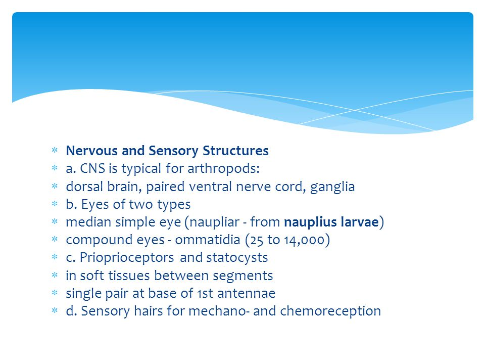 Nervous and Sensory Structures