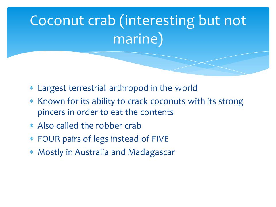 Coconut crab (interesting but not marine)