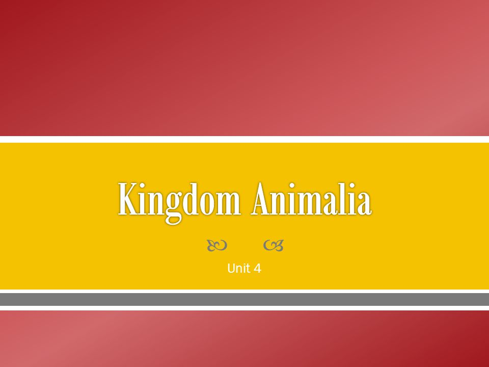 Kingdom Animalia Unit 4