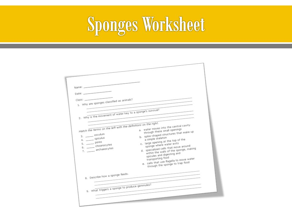 Sponges Worksheet