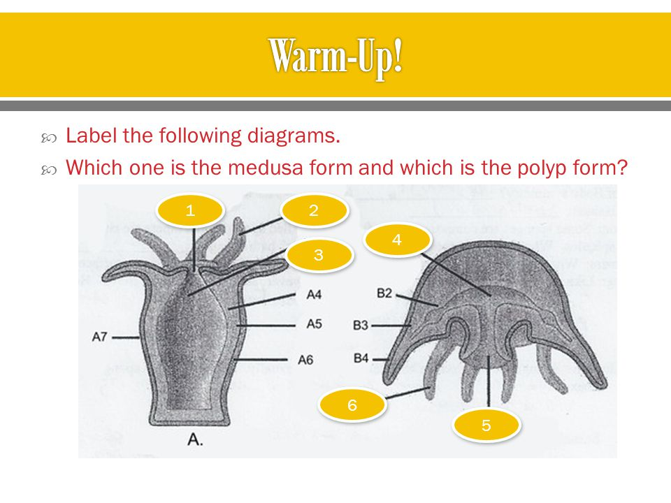 Warm-Up! Label the following diagrams.