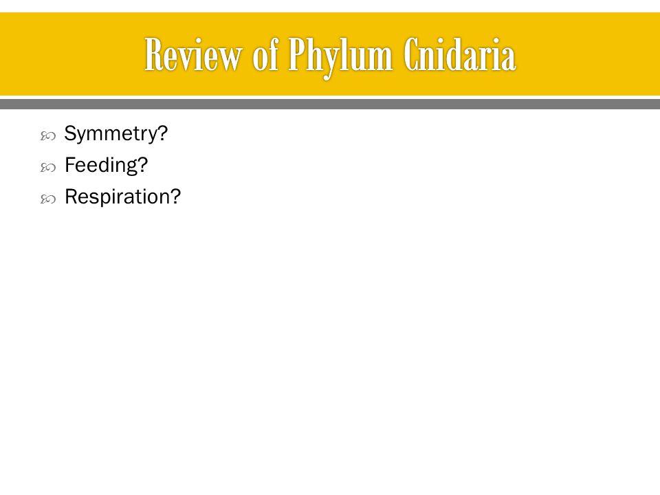 Review of Phylum Cnidaria