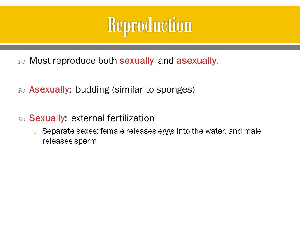 Reproduction Most reproduce both sexually and asexually.