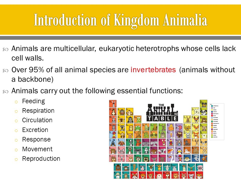 Introduction of Kingdom Animalia