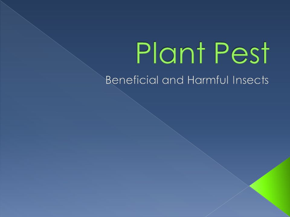 Beneficial and Harmful Insects