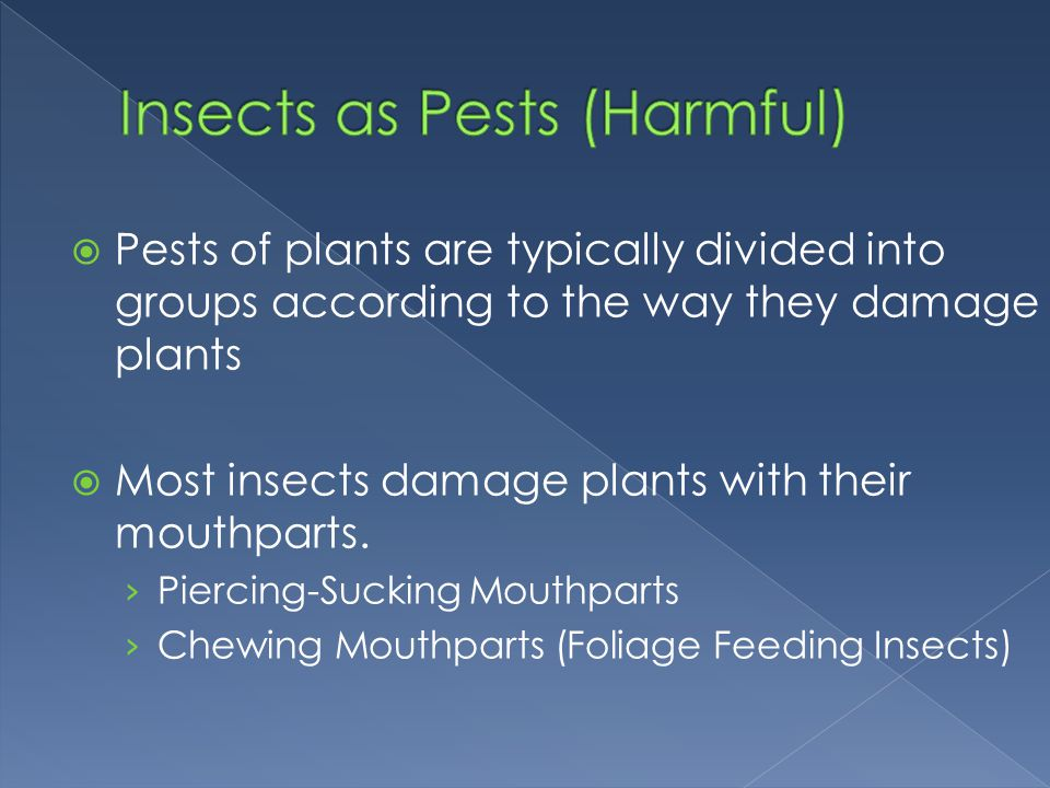 Insects as Pests (Harmful)