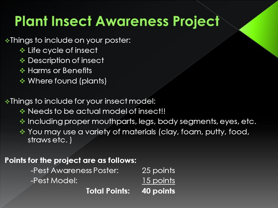 Plant Insect Awareness Project
