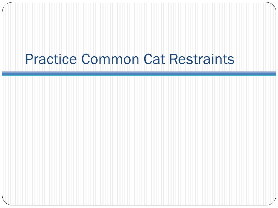 Practice Common Cat Restraints