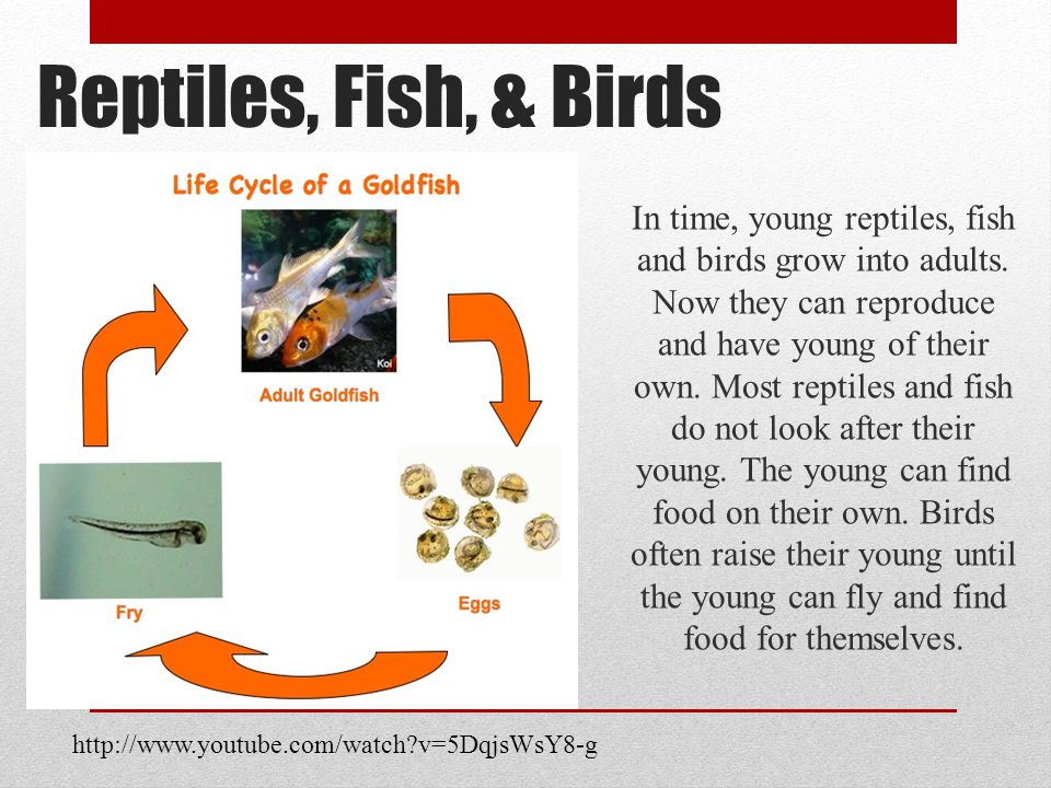 Reptiles, Fish, & Birds