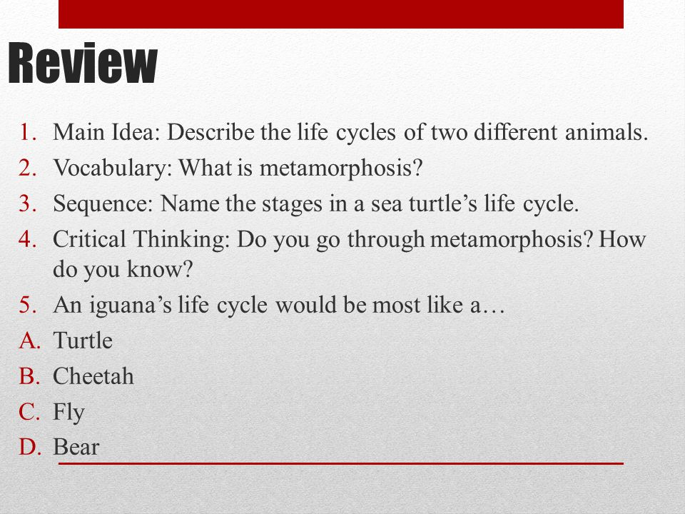 Review Main Idea: Describe the life cycles of two different animals.