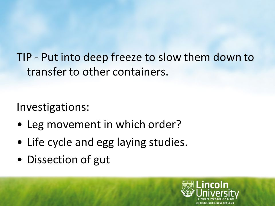 TIP - Put into deep freeze to slow them down to transfer to other containers.