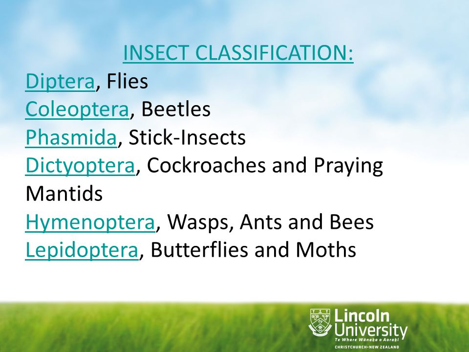 INSECT CLASSIFICATION: