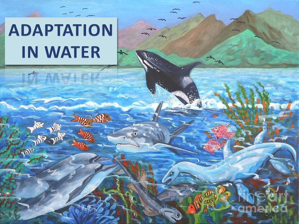 ADAPTATION IN WATER