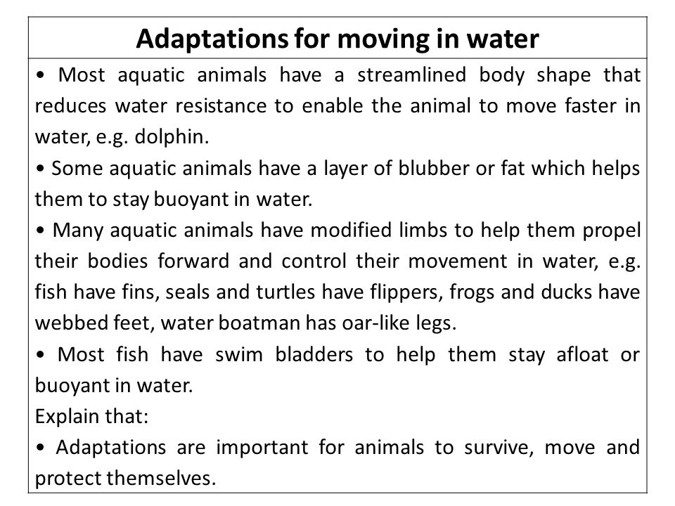 Adaptations for moving in water