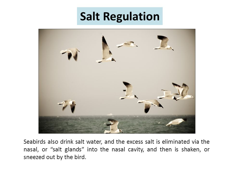 Salt Regulation