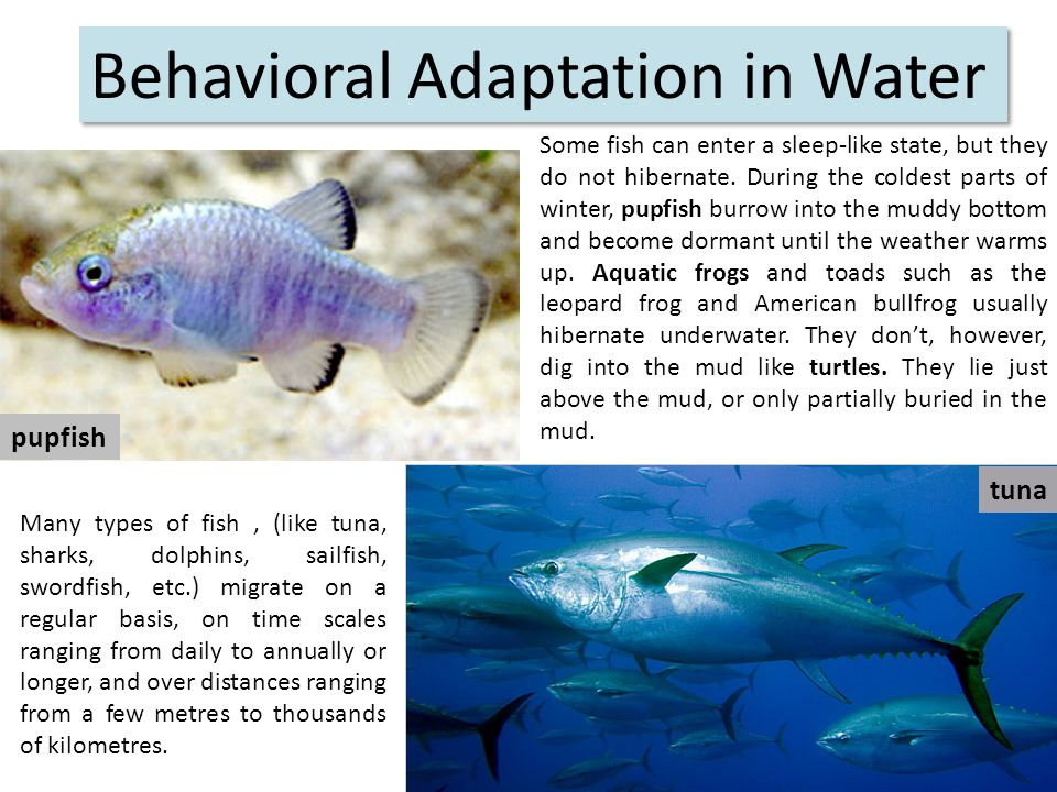 Behavioral Adaptation in Water