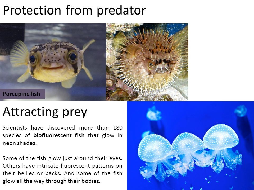 Protection from predator