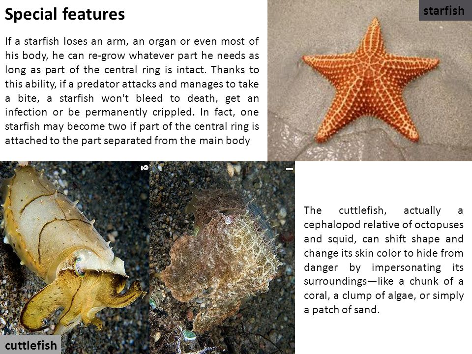 Special features starfish cuttlefish