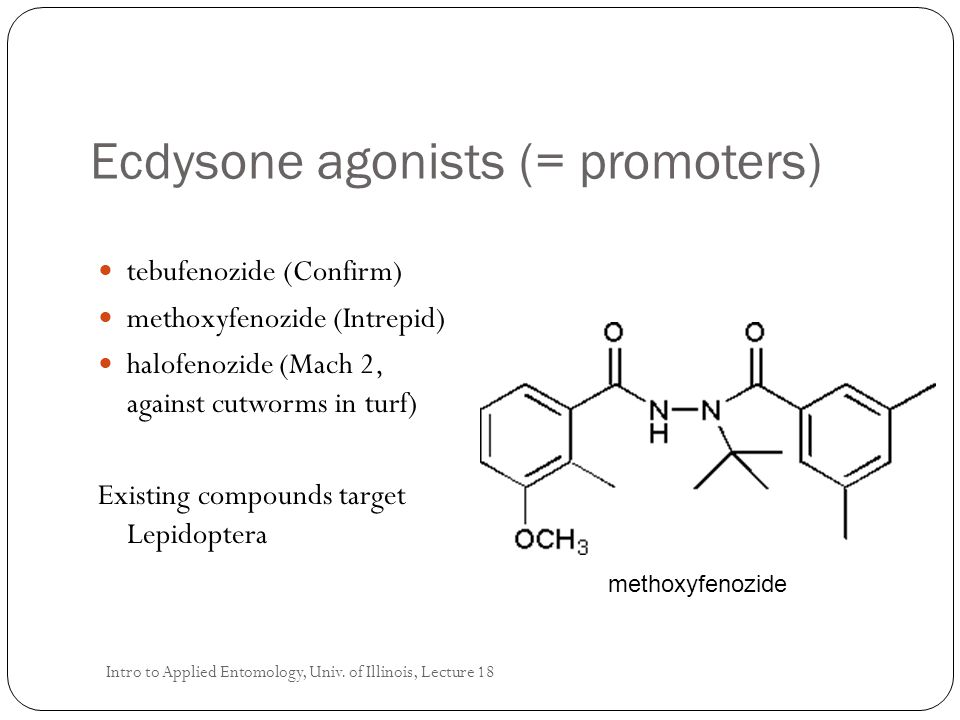 Ecdysone agonists (= promoters)