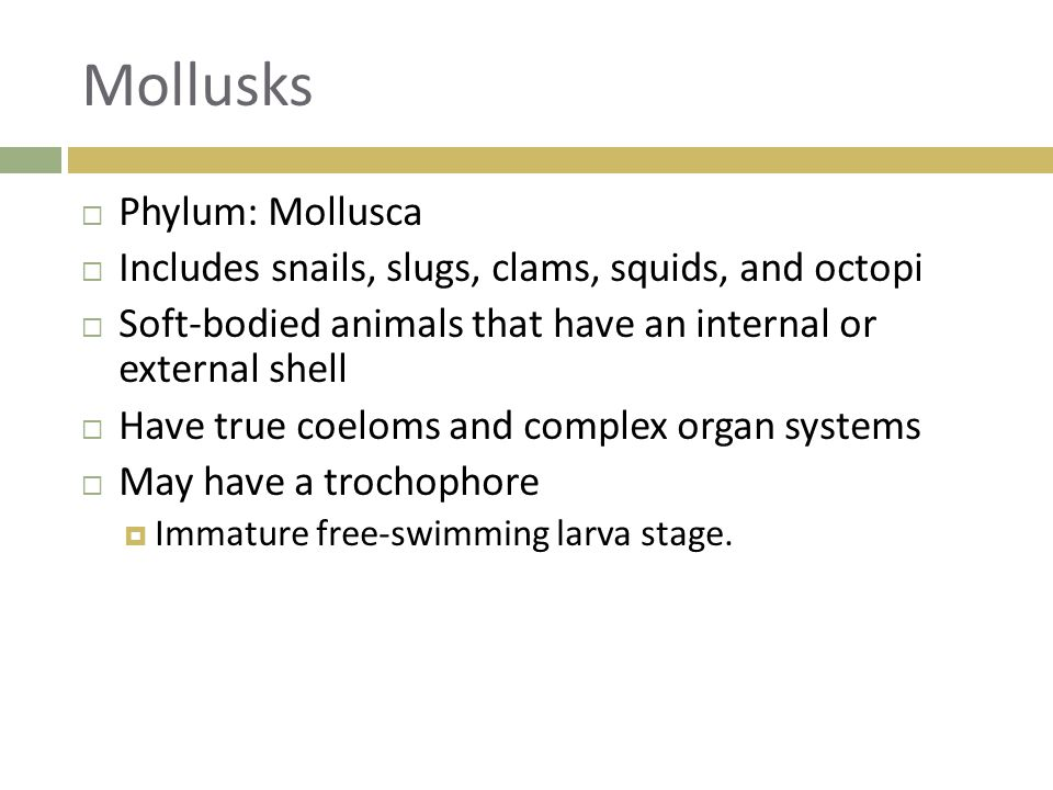 Mollusks Phylum: Mollusca