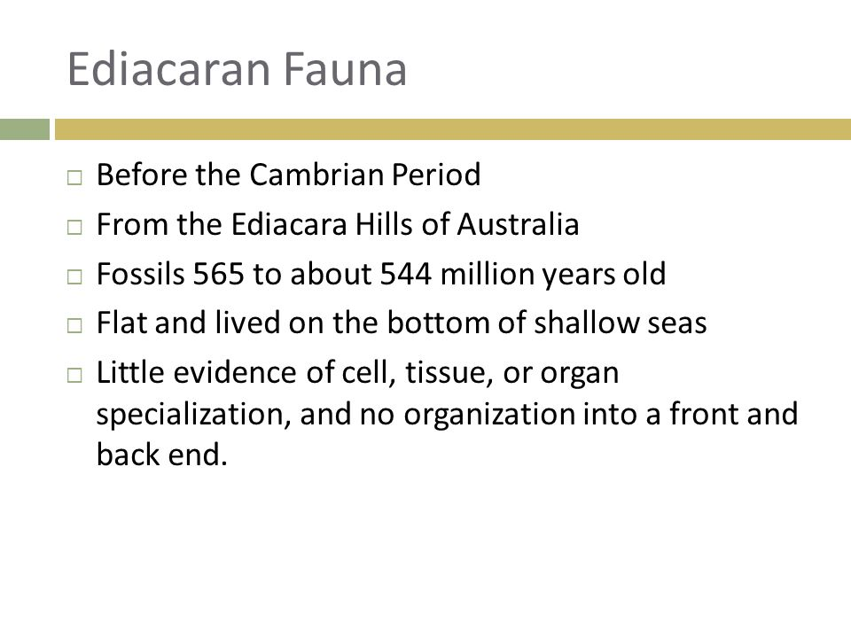Ediacaran Fauna Before the Cambrian Period