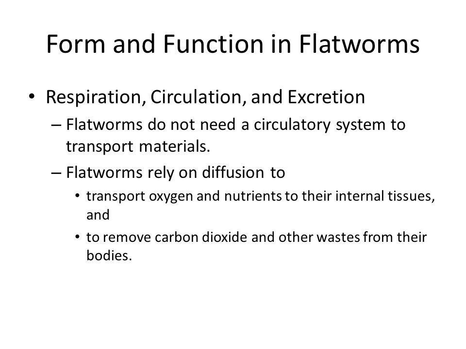 Form and Function in Flatworms