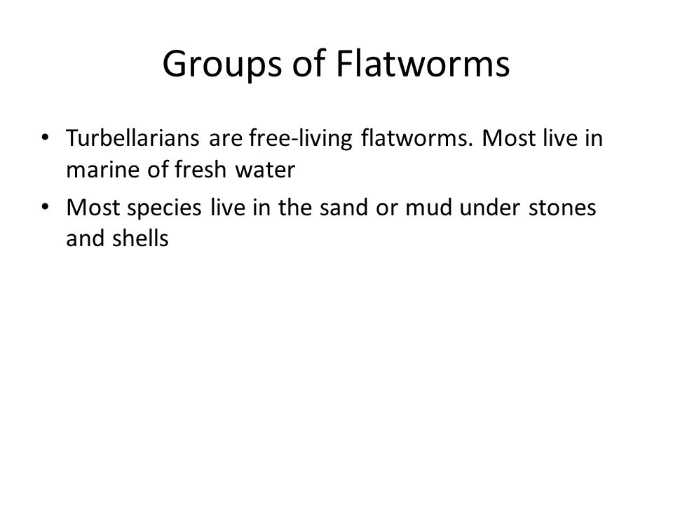 Groups of Flatworms Turbellarians are free-living flatworms. Most live in marine of fresh water.