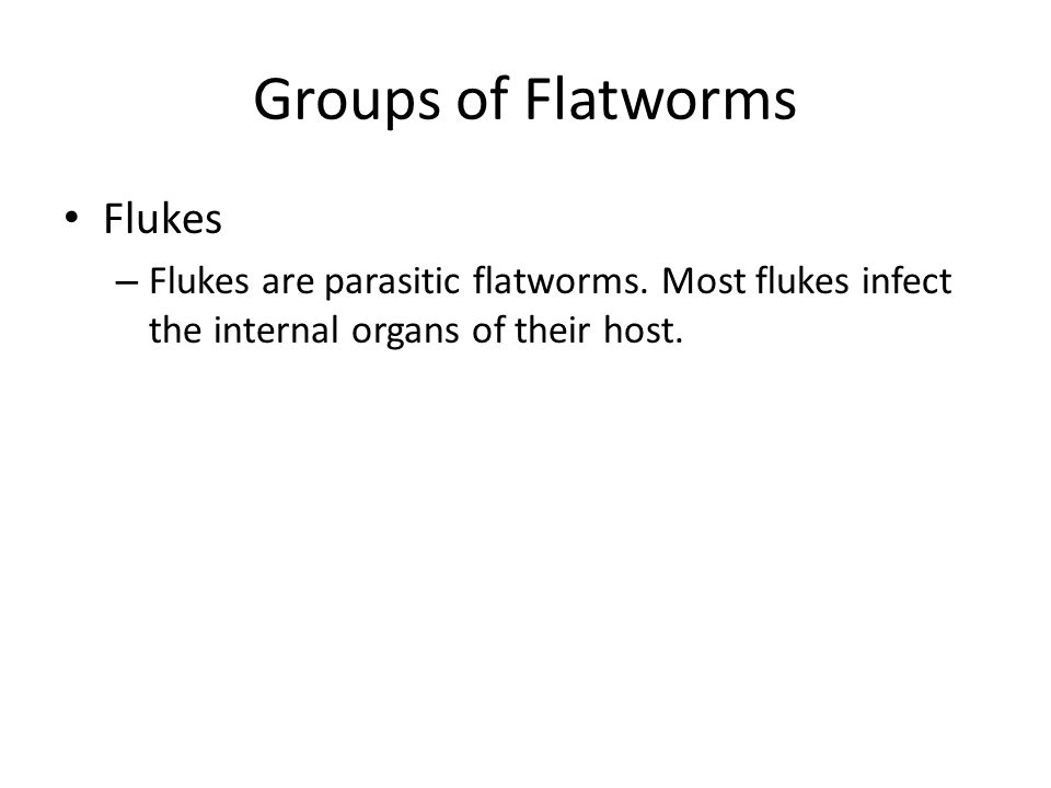 Groups of Flatworms Flukes