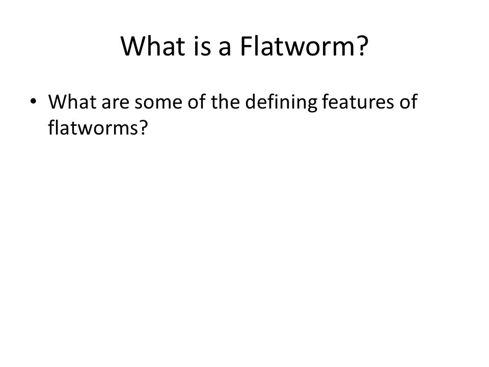What is a Flatworm What are some of the defining features of flatworms