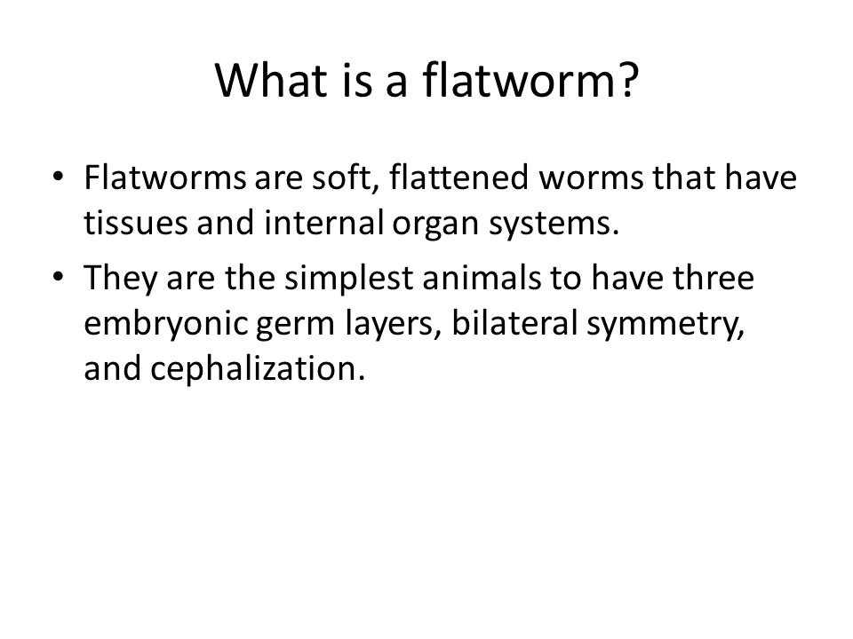 What is a flatworm Flatworms are soft, flattened worms that have tissues and internal organ systems.