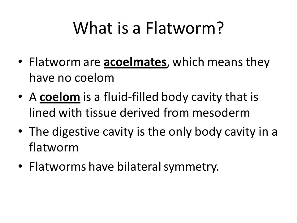 What is a Flatworm Flatworm are acoelmates, which means they have no coelom.