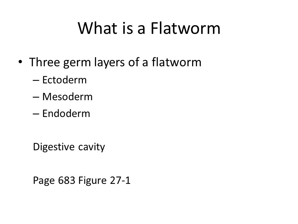 What is a Flatworm Three germ layers of a flatworm Ectoderm Mesoderm