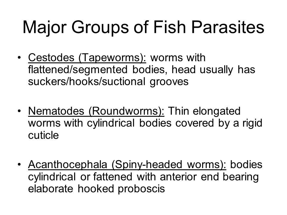 Major Groups of Fish Parasites