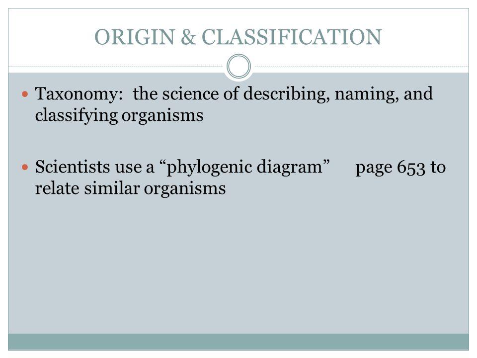 ORIGIN & CLASSIFICATION