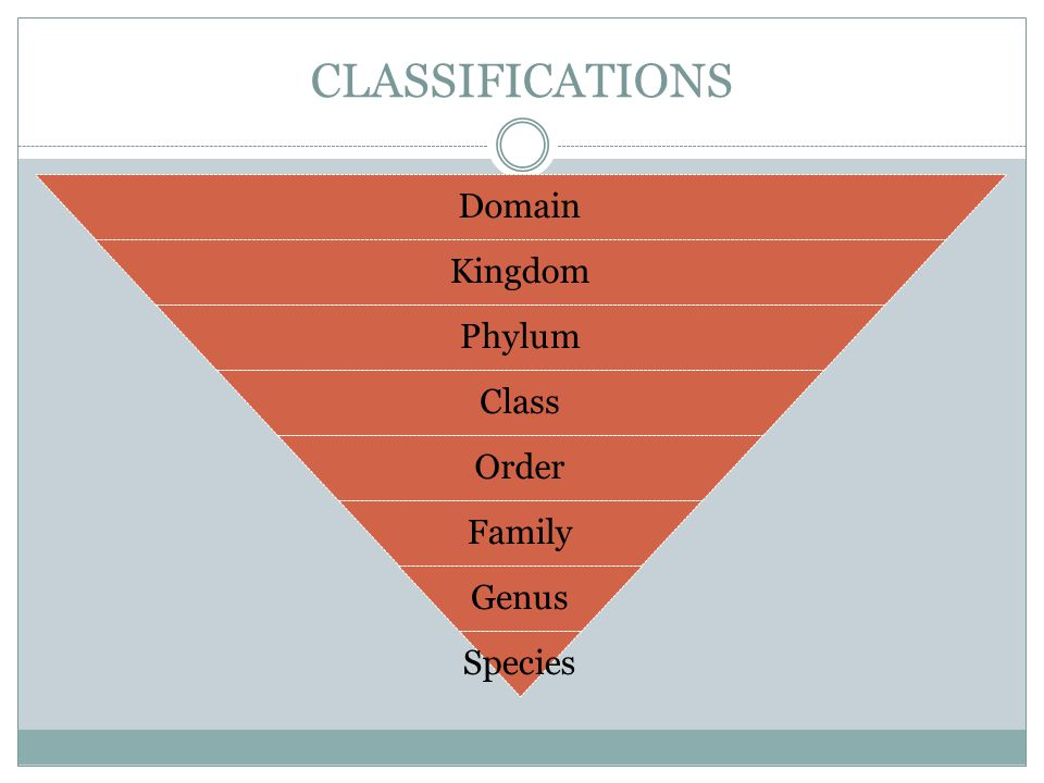 CLASSIFICATIONS Domain Kingdom Phylum Class Order Family Genus Species