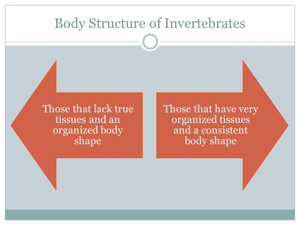 Body Structure of Invertebrates