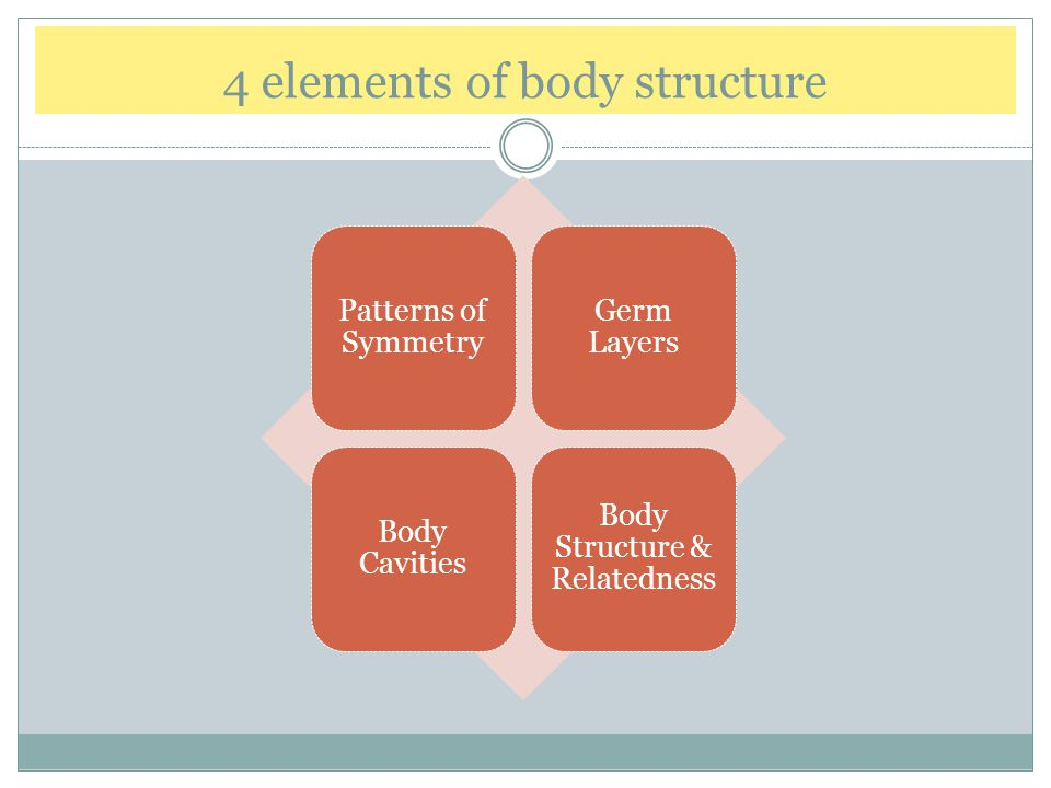 4 elements of body structure