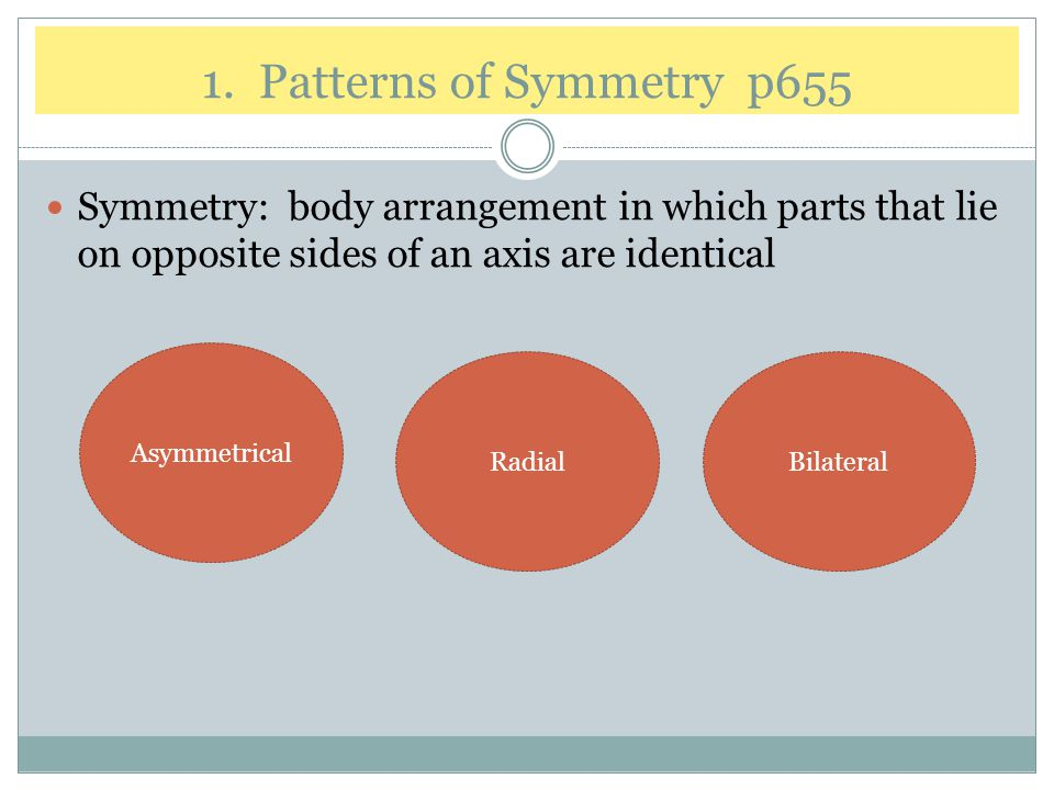 1. Patterns of Symmetry p655 Symmetry: body arrangement in which parts that lie on opposite sides of an axis are identical.