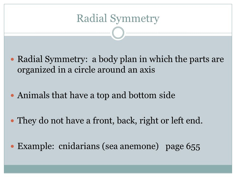 Radial Symmetry Radial Symmetry: a body plan in which the parts are organized in a circle around an axis.