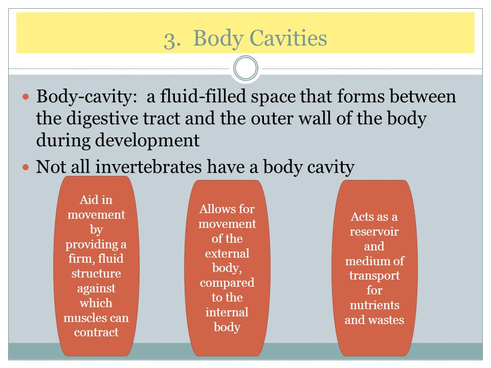3. Body Cavities Body-cavity: a fluid-filled space that forms between the digestive tract and the outer wall of the body during development.