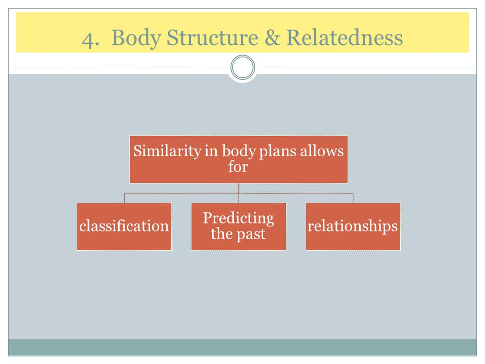 4. Body Structure & Relatedness