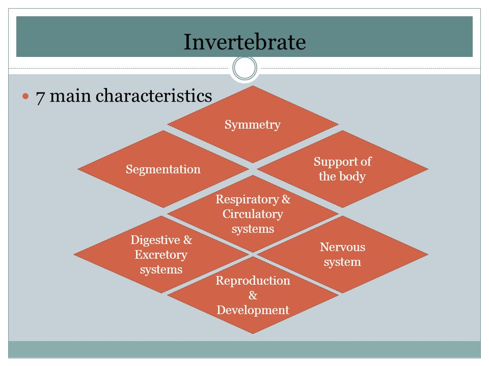 Invertebrate 7 main characteristics Symmetry Support of the body