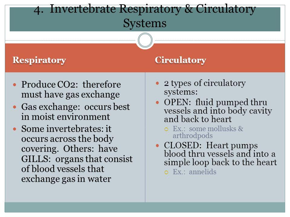 4. Invertebrate Respiratory & Circulatory Systems