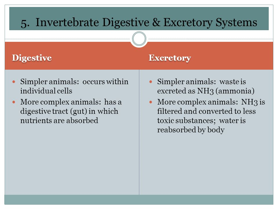 5. Invertebrate Digestive & Excretory Systems