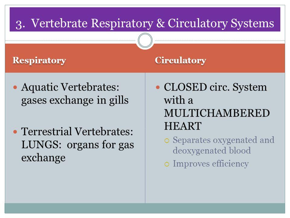 3. Vertebrate Respiratory & Circulatory Systems