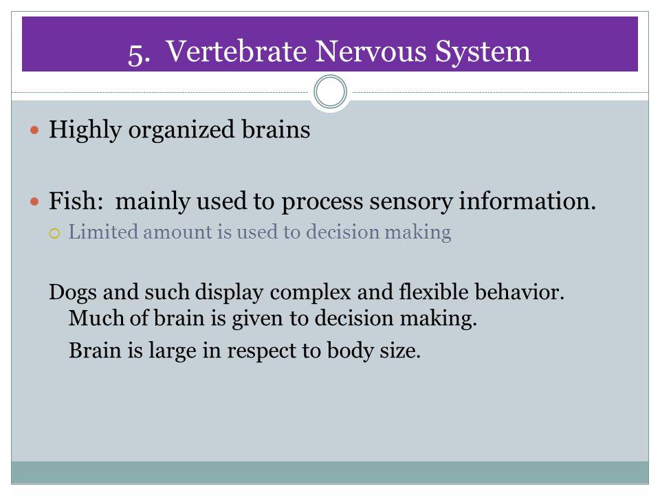 5. Vertebrate Nervous System