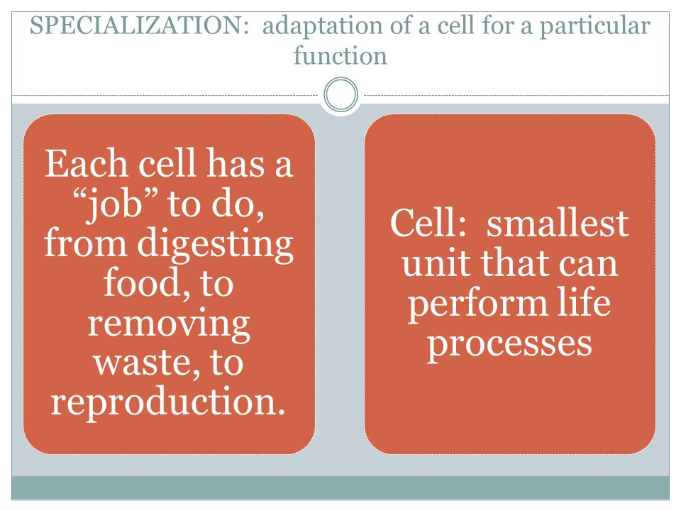 SPECIALIZATION: adaptation of a cell for a particular function