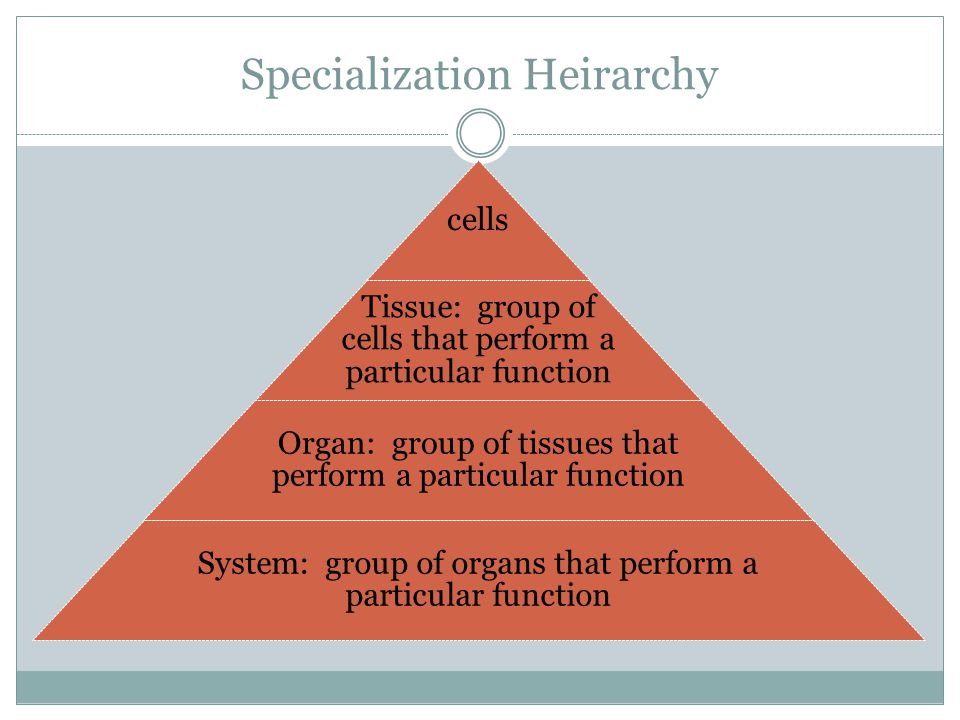 Specialization Heirarchy