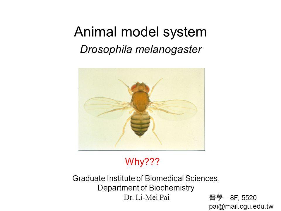 Animal model system Drosophila melanogaster
