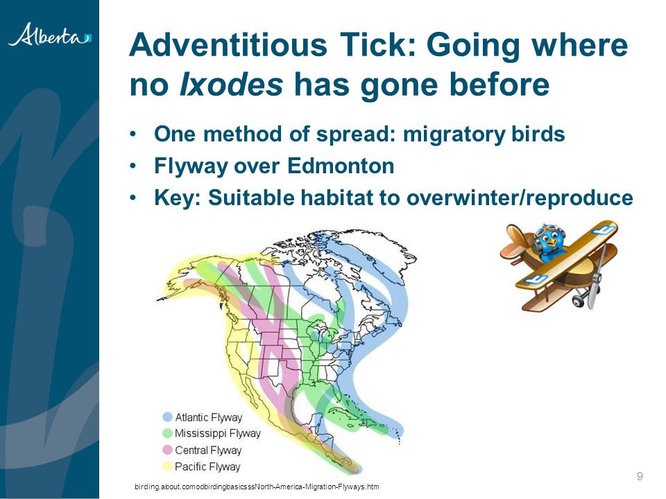 Adventitious Tick: Going where no Ixodes has gone before